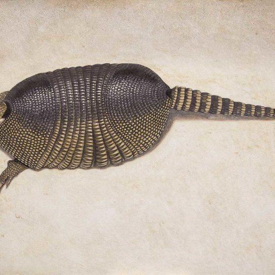 Armadillo di Camaldoli olio su tela, cm 60×100